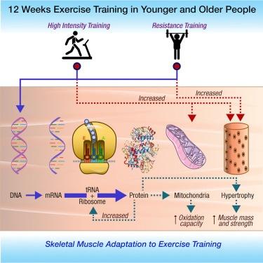 12-weeks-exercise-training-graphic.jpg