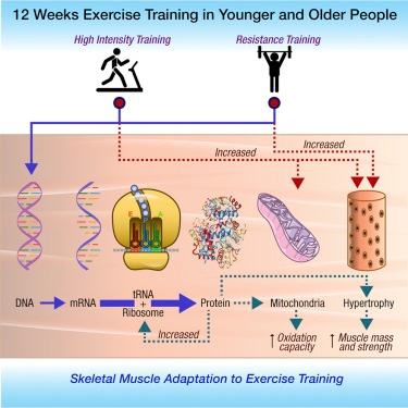 12-weeks-exercise-training-graphic.jpg