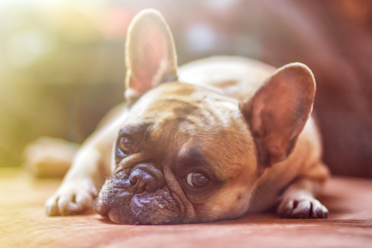 6 health benefits of having a dog in your life!