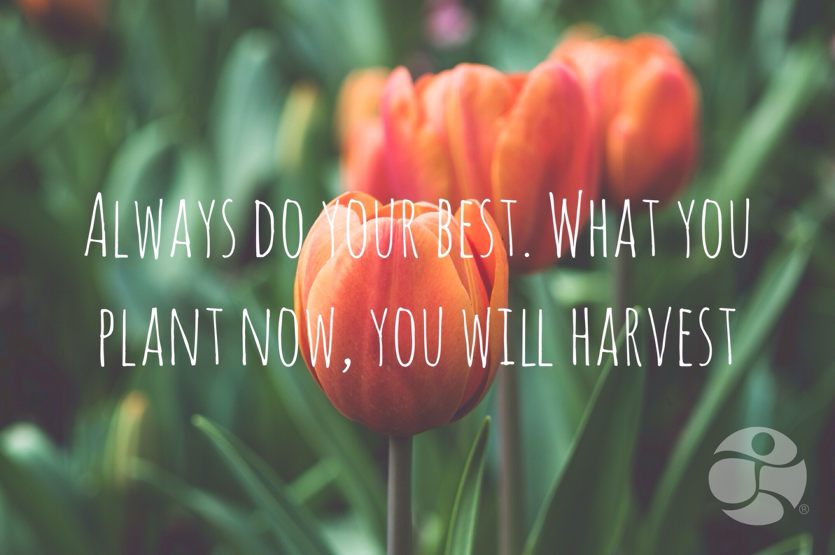 Always-do-your-best-what-you-plant-now-you-will-harvest